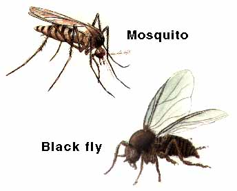 how to avoid flies with animals at home