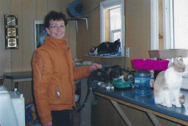 Comfie Cat 2005