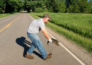 Helping Snapping Turtle 1